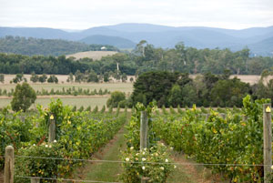 Yarra Vineyards