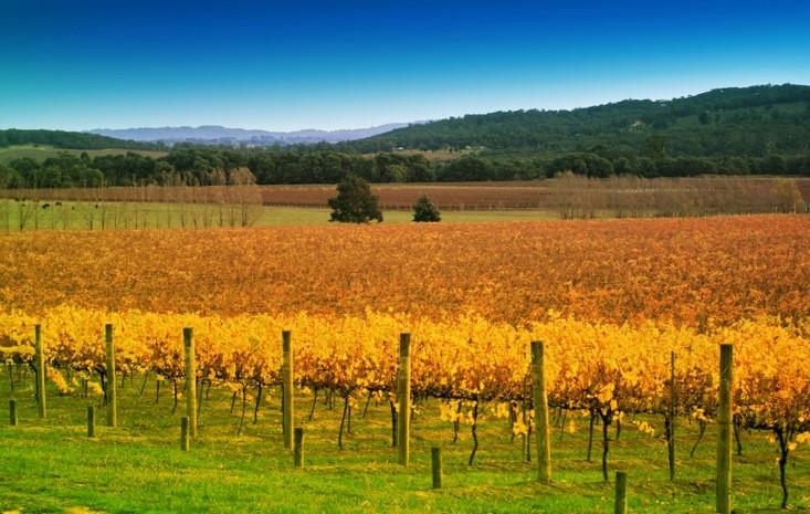 Wine regions in Victoria