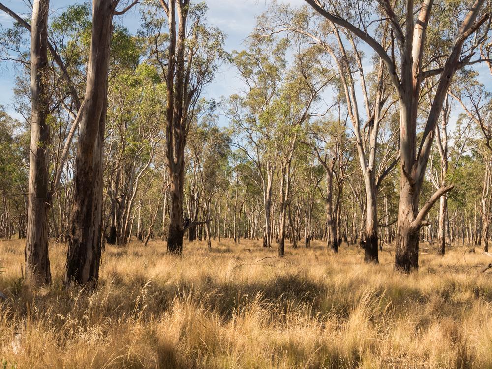 Bush walk Victoria