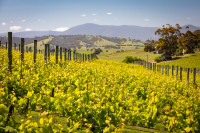 Wineries: Victoria's Finest