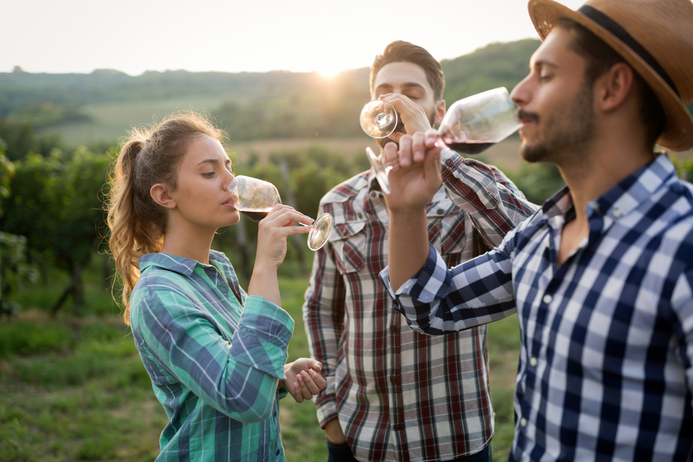 Three Friends Tasting Wine at a Winery