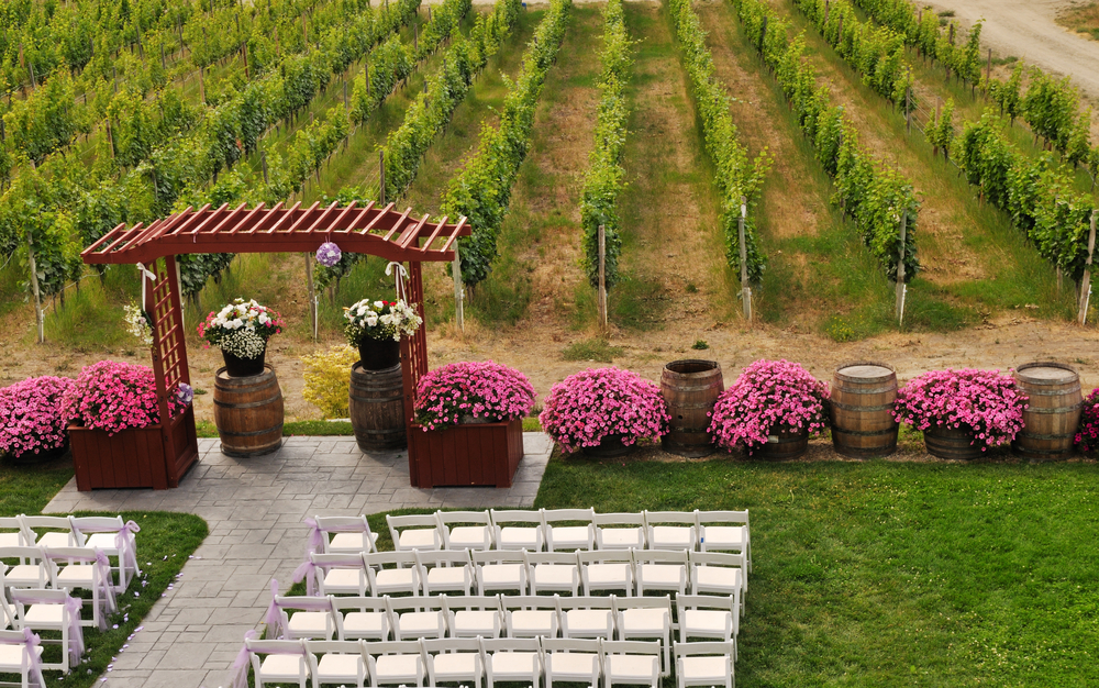Wedding at a Winery with Vineyards